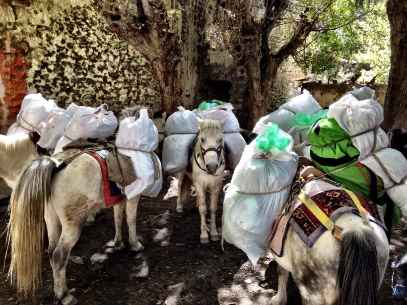 For larger trekking groups, mules are used instead of porters